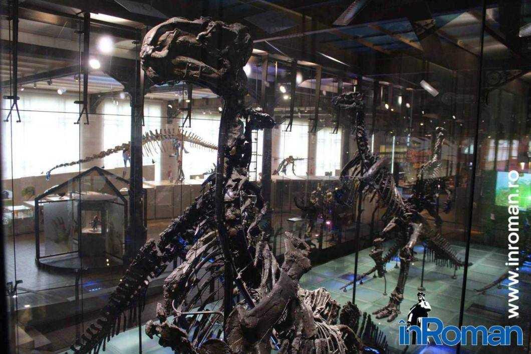 Muzeul Institului Regal al Stiintelor Naturale 1