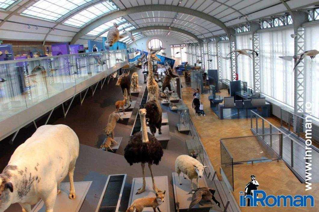 Muzeul Institului Regal al Stiintelor Naturale 10