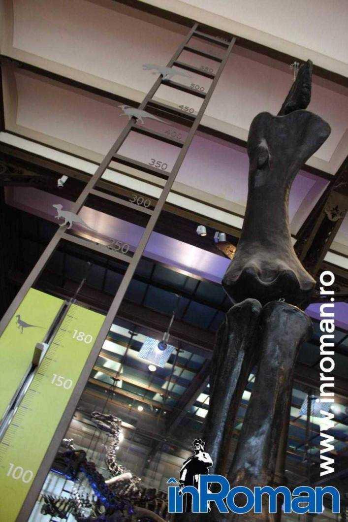 Muzeul Institului Regal al Stiintelor Naturale 4