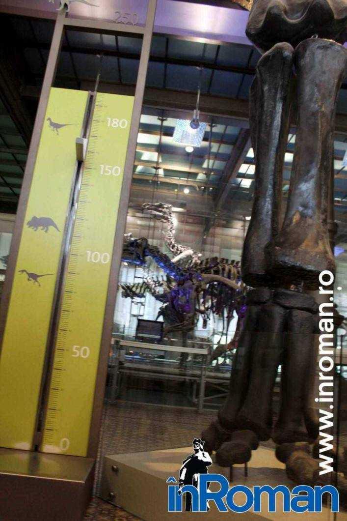 Muzeul Institului Regal al Stiintelor Naturale 5