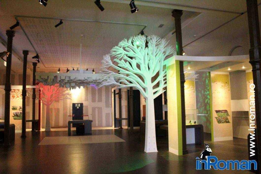 Muzeul Institului Regal al Stiintelor Naturale 6