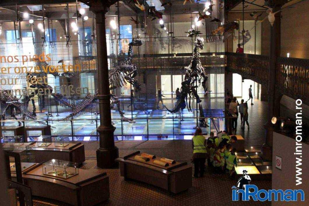 Muzeul Institului Regal al Stiintelor Naturale 9