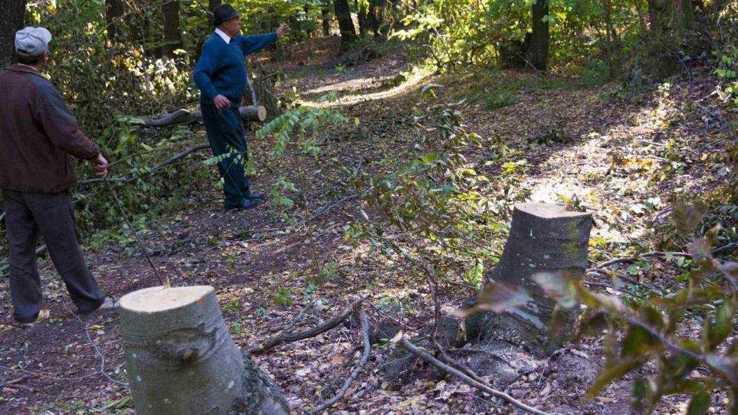"""La Bahna, hoții de lemne au mai multe drepturi decât proprietarii de pădure (II): Direcția Silvică Bacău i-a lăsat pe oameni fără pază la pădure """"în total dezacord"""" cu legea"""