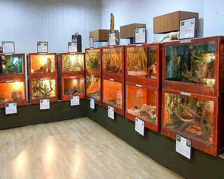 Expoziție născută din pasiune pentru reptile