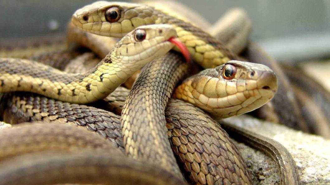 Reptile vii din 70 de specii la Muzeul de Științe ale naturii