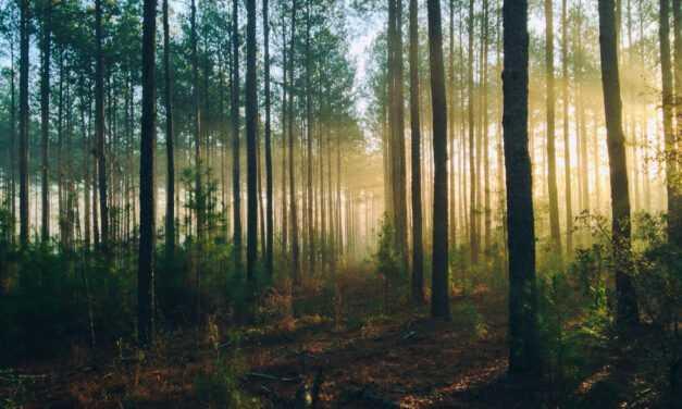 Percheziții la un ocol silvic din Neamț pentru corupție
